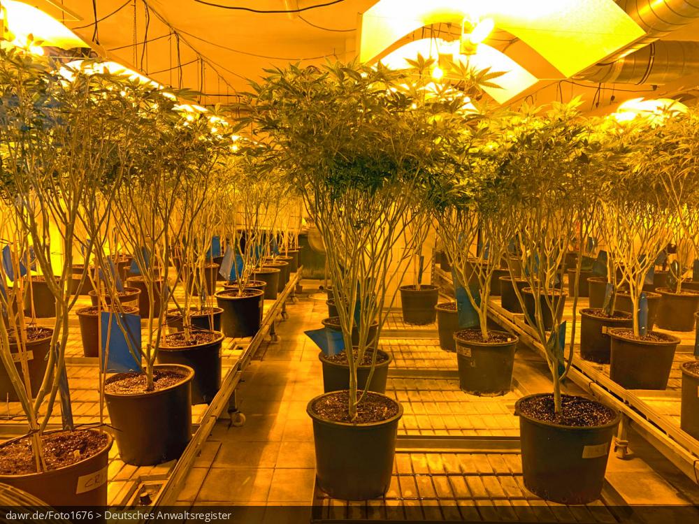 Dieses Bild zeigt eine Hanfplantage, in der Hanfpflanzen unter künstlichem Licht herangezogen werden. Hanf (Cannabis) zählt zu den ältesten Nutz- und Zierpflanzen der Erde und dient als wichtiger nachwachsender Rohstoff für die Textilindustrie und Bauwirtschaft, aber auch als Rausch- und Arzneimittel, welches dem Betäubungsmittelgesetz (BtMG) unterliegt. Seit dem 10. März 2017 ist Cannabis in Deutschland als verschreibungsfähiges Arzneimittel zugelassen, welches theoretisch von jedem Arzt verschrieben werden kann, wenn dieser den Einsatz als sinnvoll erachtet. Dieses Bild eignet sich gut als symbolische Darstellung für Rechtsfragen zum Umgang mit Hanf (Cannabis) als Droge oder Arzneimittel.