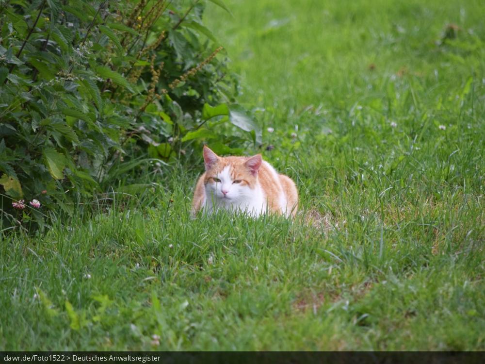 Dieses Foto zeigt eine Katze, die im Gras sitzt und lauert. Es gibt immer wieder rechtliche Fragen im Zusammenhang mit der Haltung von Katzen, für welche dieses Bild eine gute symbolische Darstellung ist.